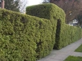 entry hedge